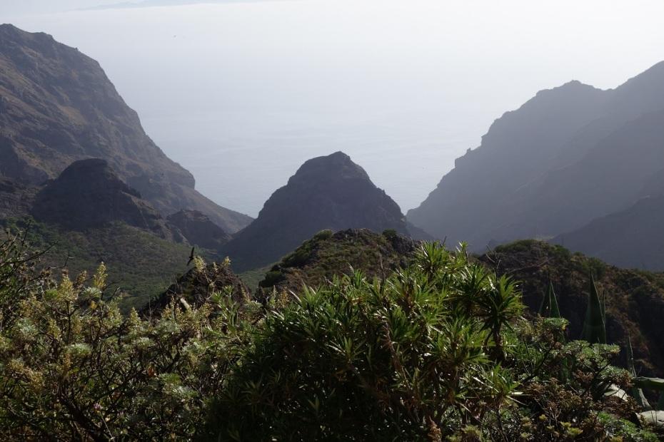 Valea Masca - Tenerife 2016
