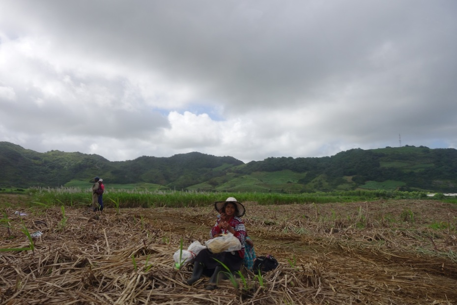 plantatie de zahar Mauritius
