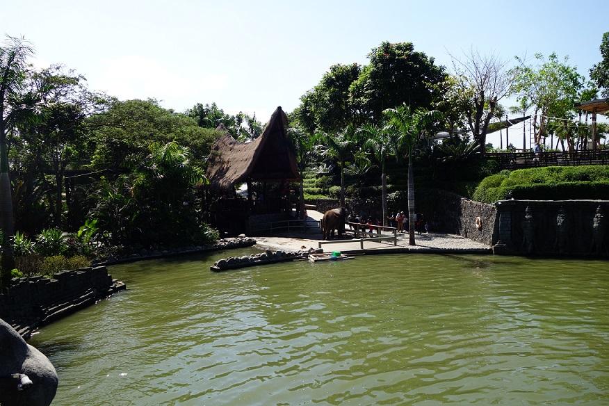Gradina Zoologica - Bali