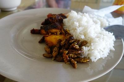 Insecte Vietnam