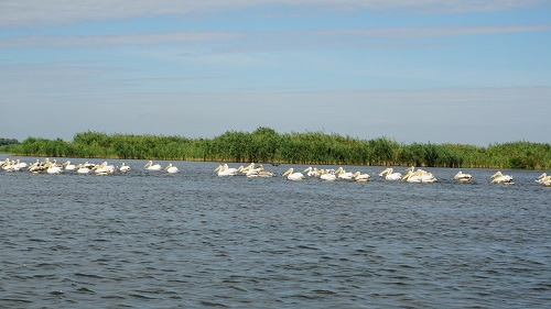 Rezervatia Delta Dunarii